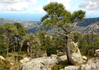 Piscia di Ghjaddu, rando en montagne, accessible à tous.